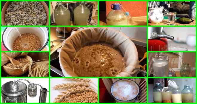 Самогона из пророщенной пшеницы в домашних условиях 524